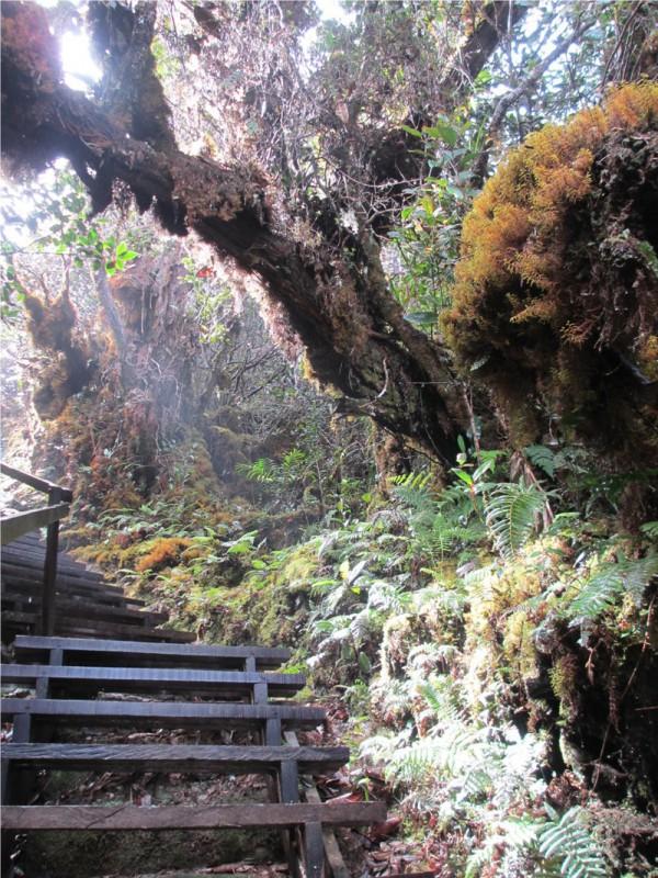 2 Day Hike Mount Kinabalu Malaysia Low's Peak - Stairs Trail