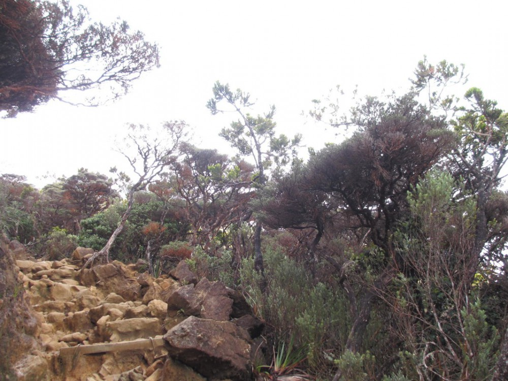 2 Day Hike Mount Kinabalu Malaysia Low's Peak - Mud Stairs