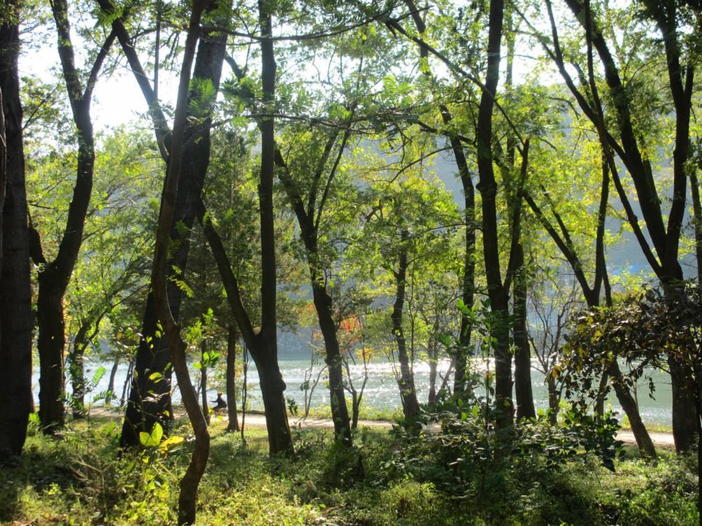 Nami Island Seoul Korea Trees