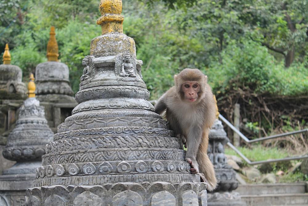 Kathmandu Nepal - Monkey Temple