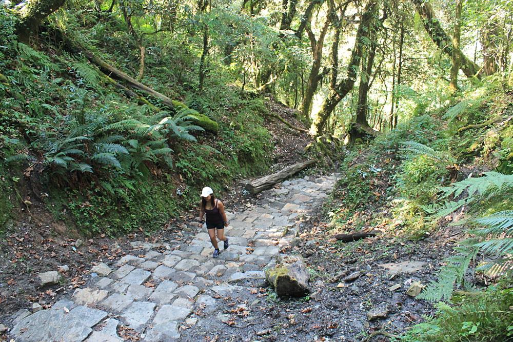Ghorepani Poonhill Ghandruk Himalayas Trek Nepal -  Trail