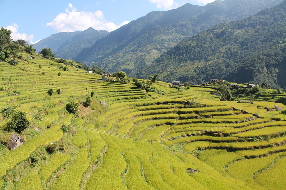 Ghorepani-Poonhill-Trek-Rice-Terraces
