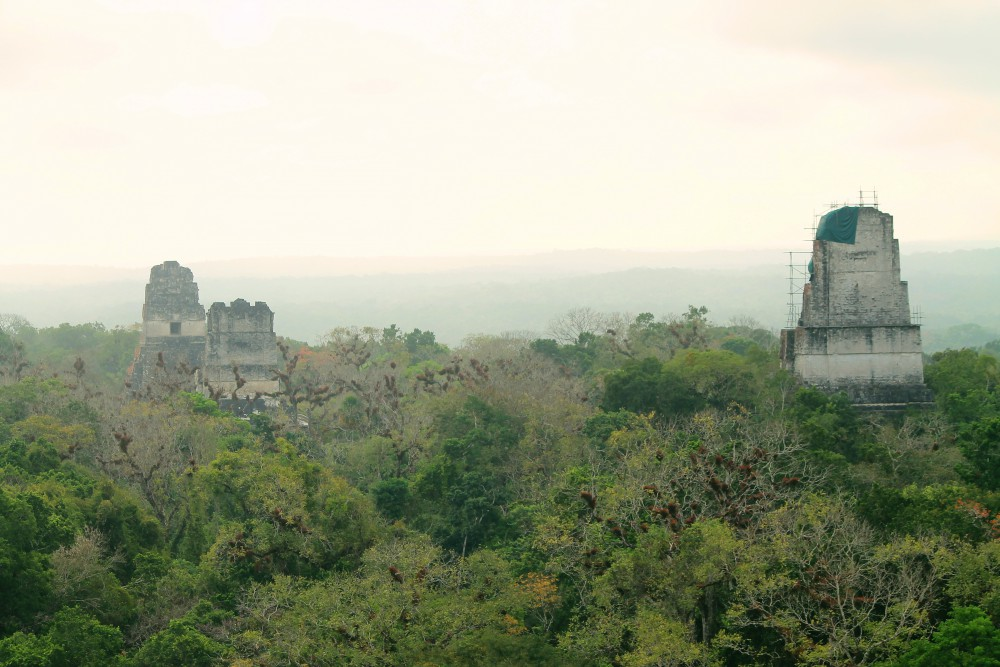 Tikal Best Ruins in Guatemala - Pyramid - Temple 4 View