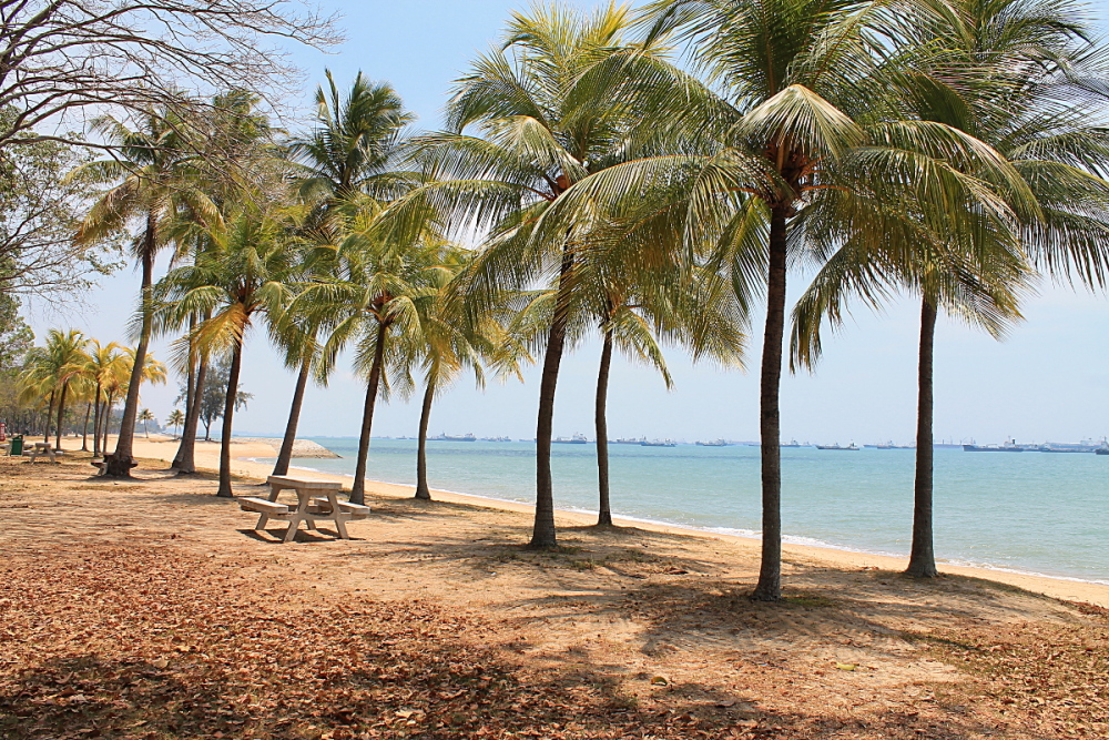 East Coast Park - Best Free Things to Do in Singapore