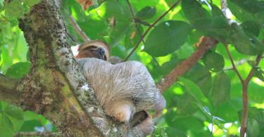 Day Trip Manuel Antonio National Park Costa Rica - Beaches Wildlife Rainforest - Sloth