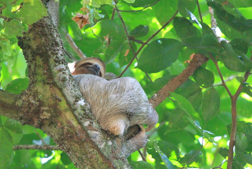 Day Trip Manuel Antonio National Park Costa Rica - Beaches Wildlife Rainforest - Sloth