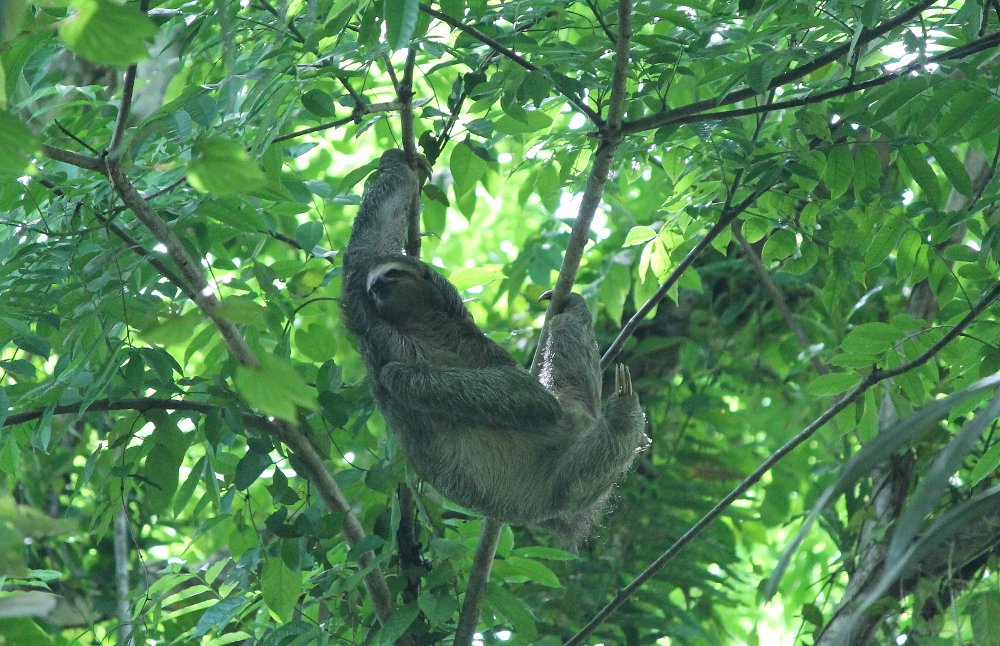 Day Trip Manuel Antonio National Park Costa Rica - Beaches Wildlife Rainforest -  Sloth Trees