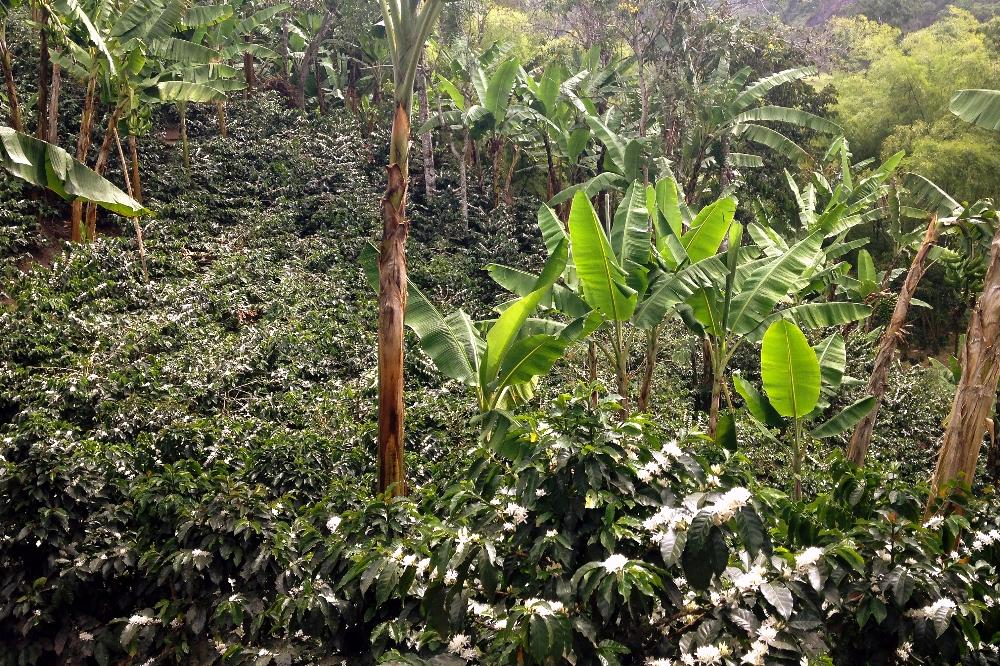 Coffee Tour Salento Colombia - Organic Farm - Finca Don Elias