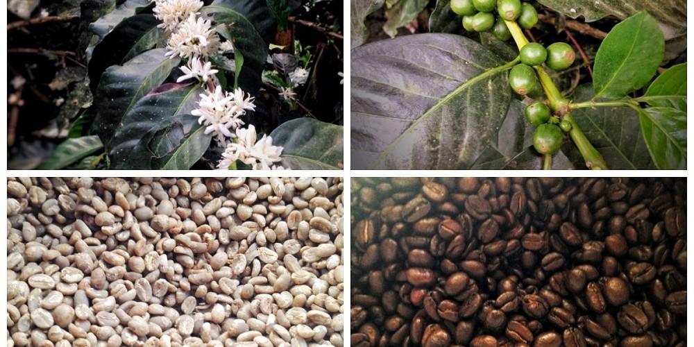Coffee Tour in Salento Colombia - Finca de las Brisas (Cafe Don Elias)
