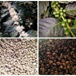 Coffee Tour in Salento: A Taste of Colombian Coffee