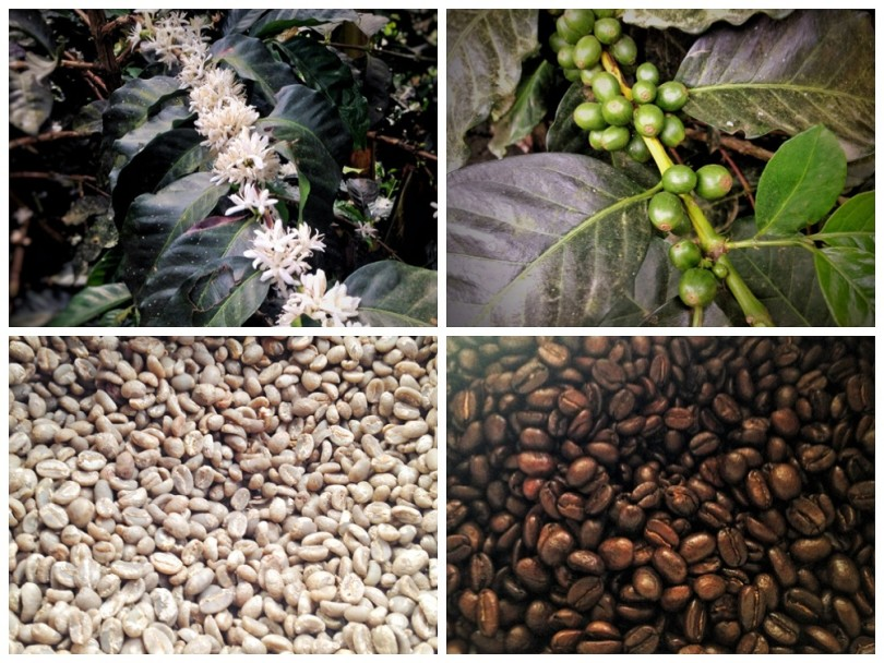 Coffee Tour in Salento Colombia - Finca de las Brisas (Cafe Don Elias)