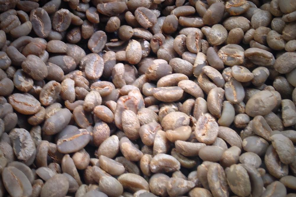 Coffee Tour Salento Colombia- Raw Coffee Beans