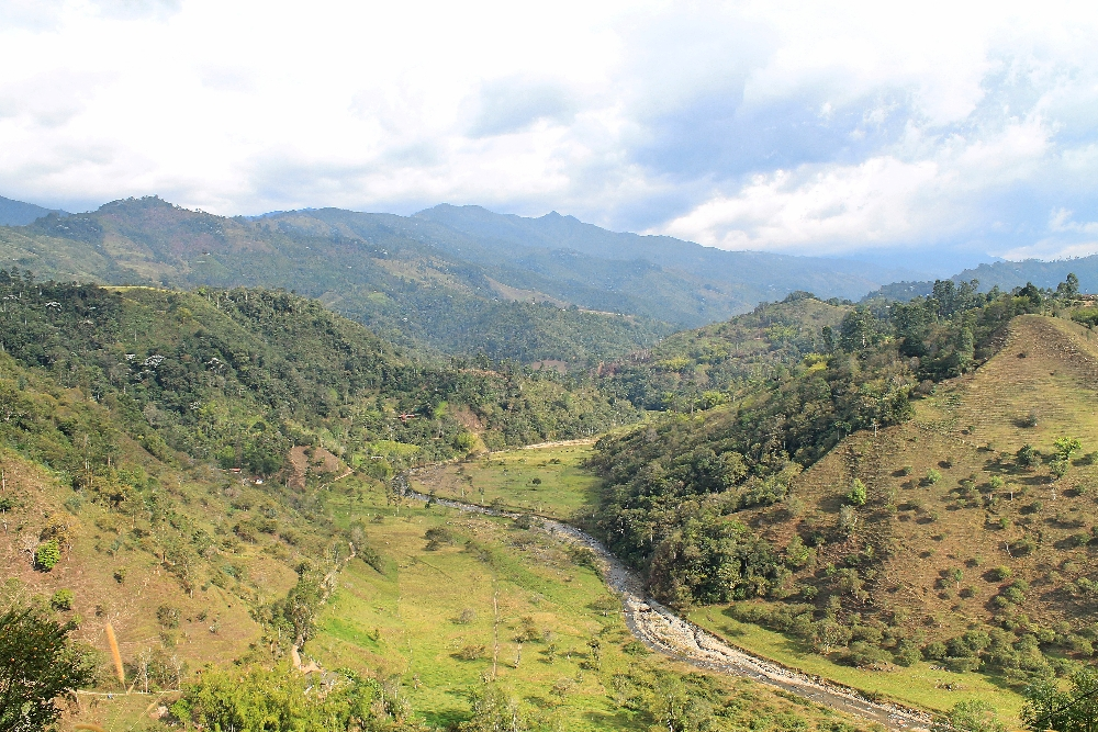 The view of the lush coffee farms during our coffee tour in Salento in Colombia