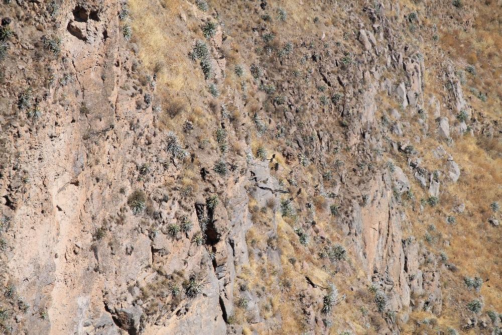 2 Days Colca Canyon Trek - Peru Hike - Condor Tower