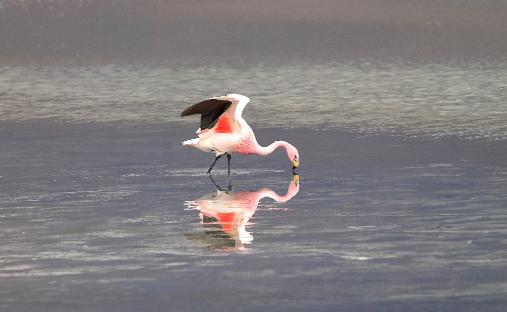3 Day Slat Flat Tour Salar de Uyuni Bolivia - Pink Flamingo Colourful Lakes