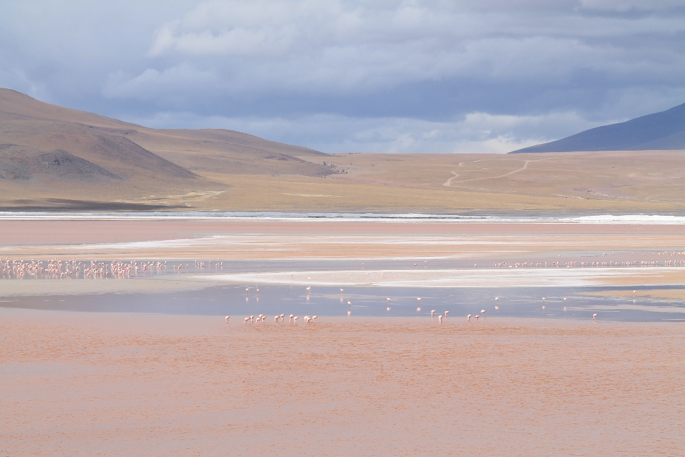 3 Day Slat Flat Tour Salar de Uyuni Bolivia - Laguna Colorada Flamingoes