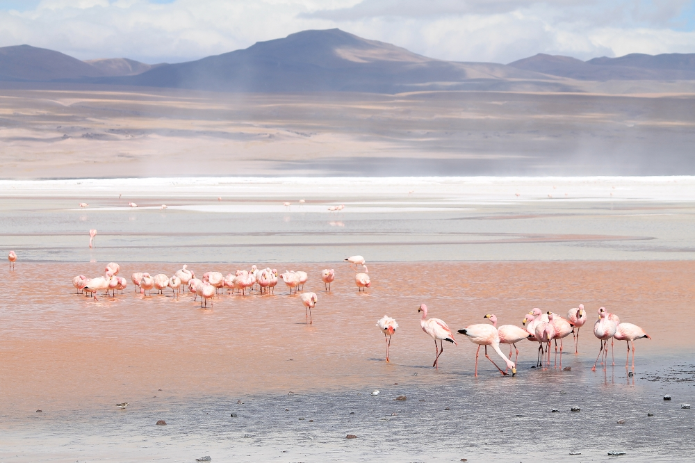 3 Day Slat Flat Tour Salar de Uyuni Bolivia - Laguna Coloroda Flamingoes