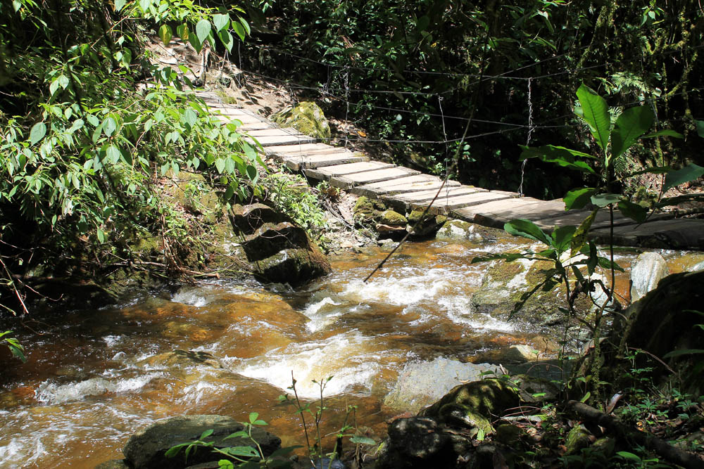 Day Hike to Valle de Cocora Colombia Salento - Trail Cloud Forest