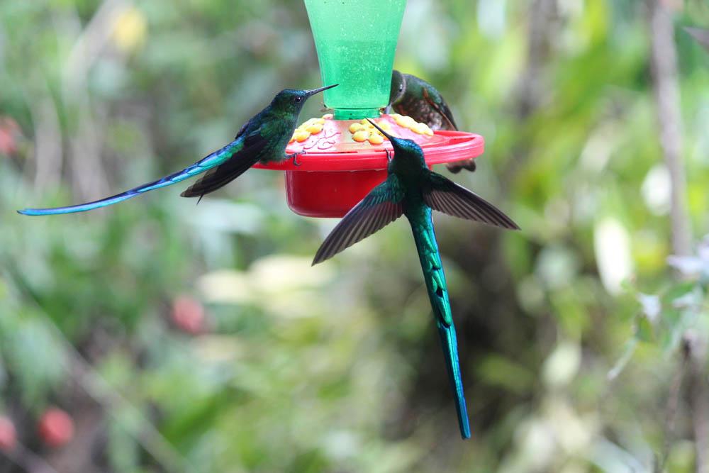 Day Hike to Valle de Cocora Colombia Salento - Colibri Hummingbird