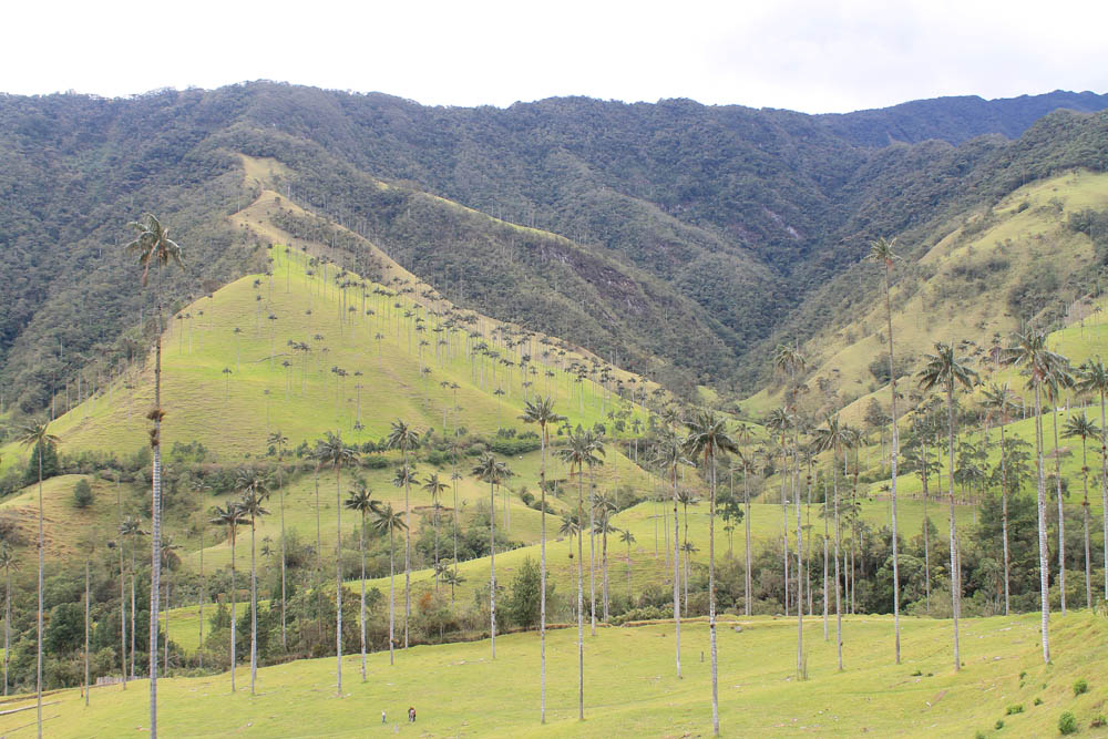 Day Hike to Valle de Cocora Colombia Salento - Trail Wax Palm Trees