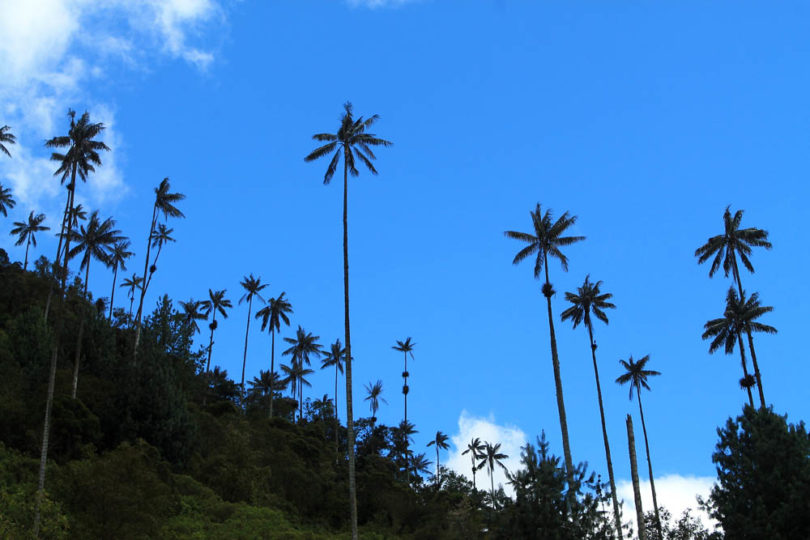 Day Hike to Valle de Cocora Colombia Salento - Scenery