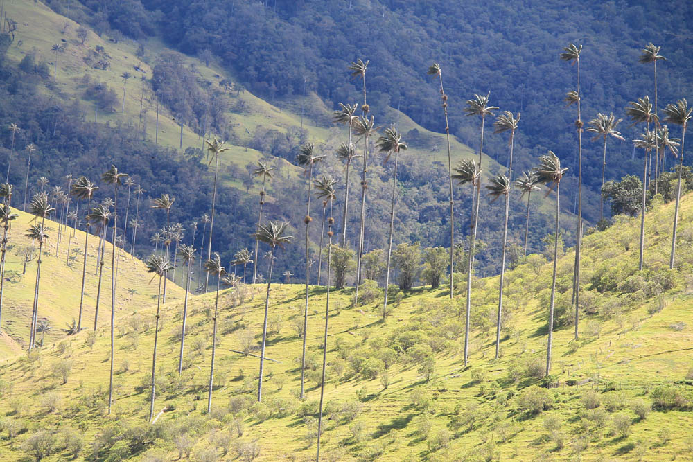Day Hike to Valle de Cocora Colombia Salento - Trail Start