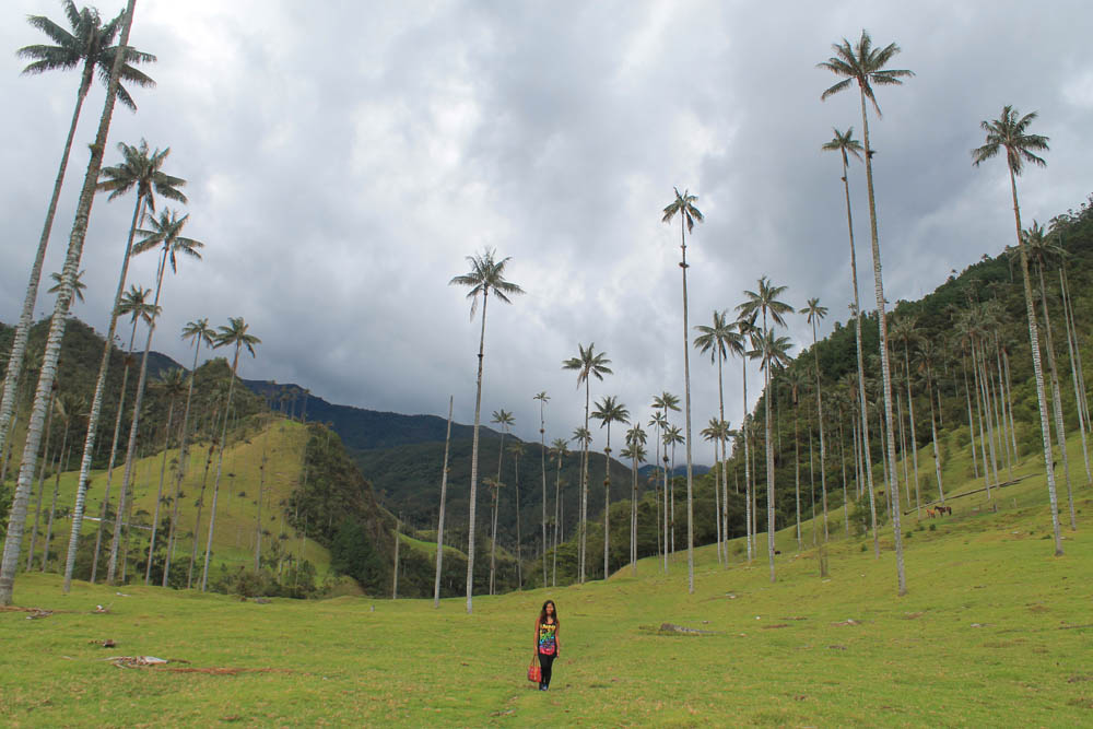 Day Hike to Valle de Cocora Colombia Salento - Wax Palm Trees