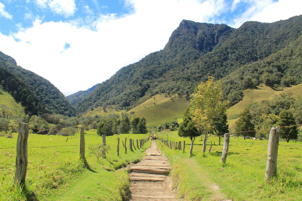 Day Hike to Valle de Cocora Colombia Salento - Trail