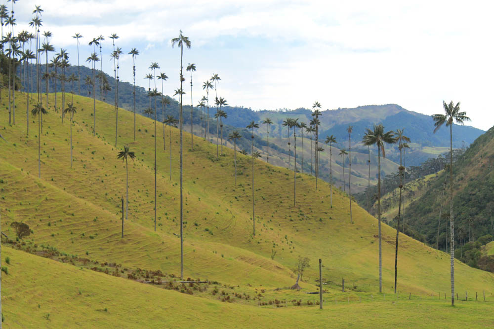 Day Hike to Valle de Cocora Colombia Salento - Trail Wax Palms