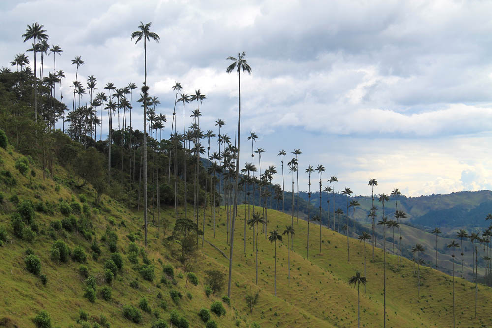 Day Hike to Valle de Cocora Colombia Salento - Trail Cocora Vallehyy