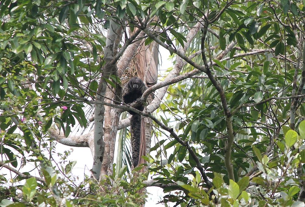 4-day-amazon-tour-cuyabeno-reserve-ecuador-monkey