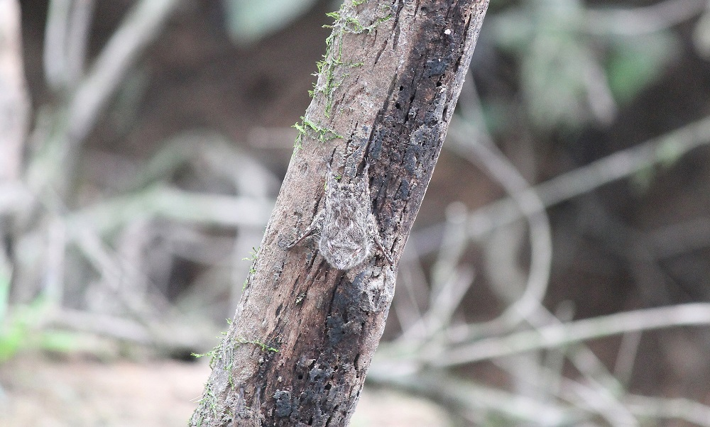 4-day-amazon-tour-cuyabeno-reserve-ecuador-spider