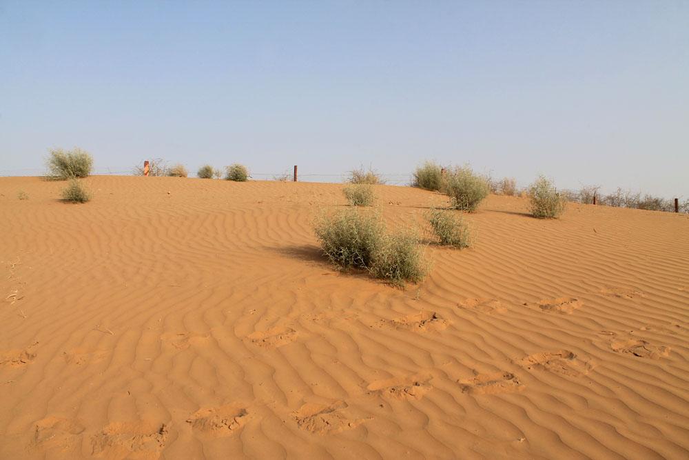 Sand Dunes - Camp Thar - Osian - Desert Safari