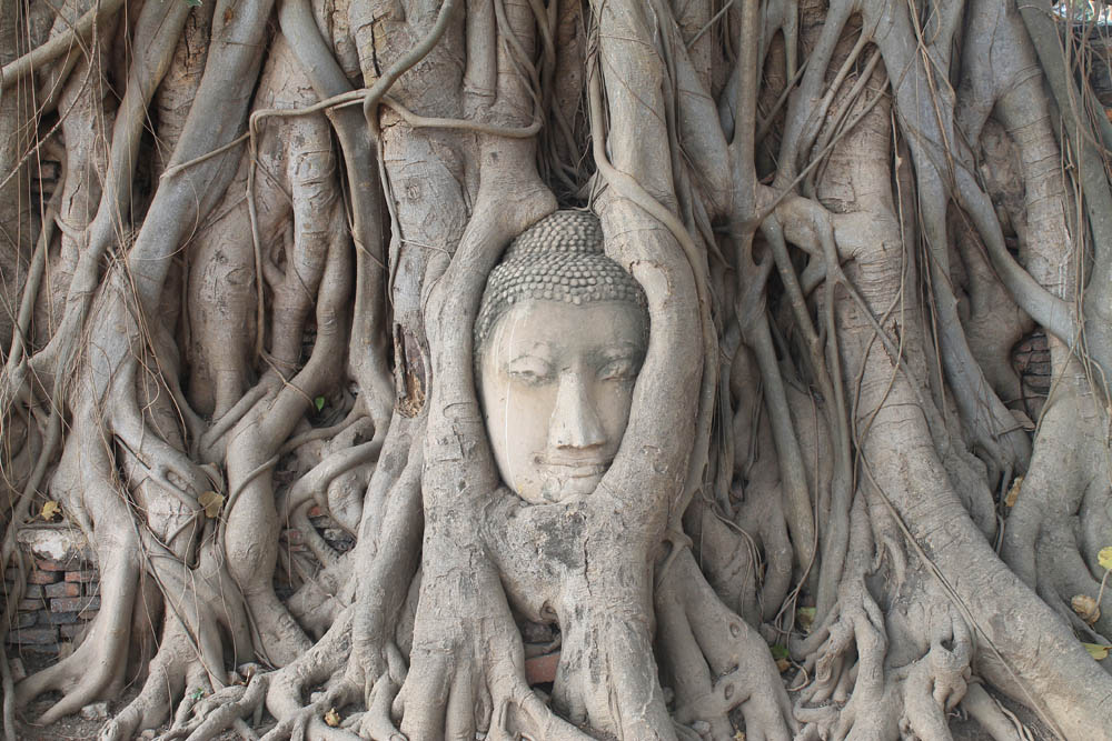 Buddha of Wat Mahathat - Ayutthaya vs Sukhothai - Best Ancient Ruins in Thailand