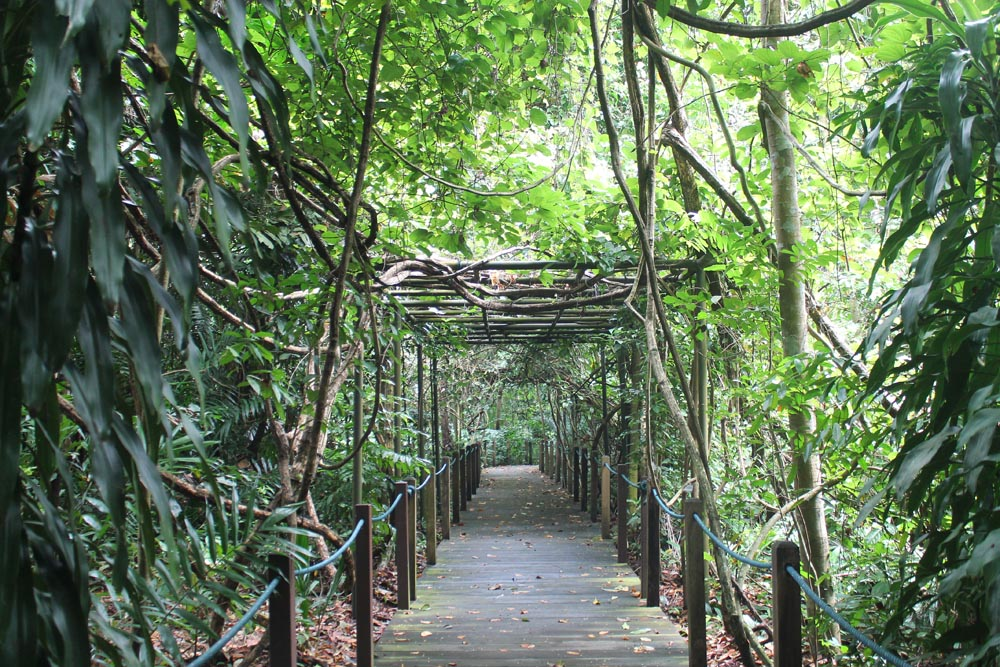 Botanic Gardens - Best Free Things to Do in Singapore