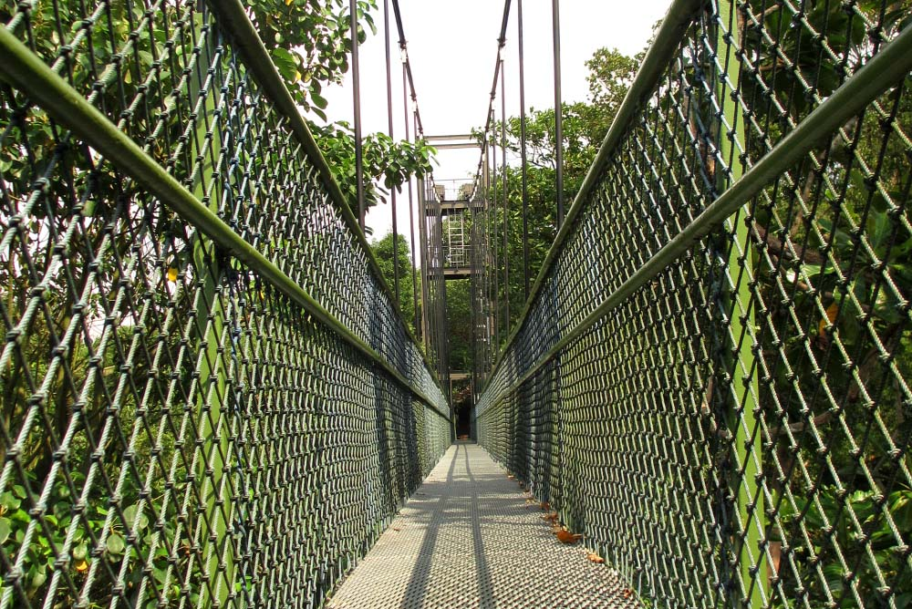 Macritchie Reservoir Tree Top Walk - Best Free Things to Do in Singapore