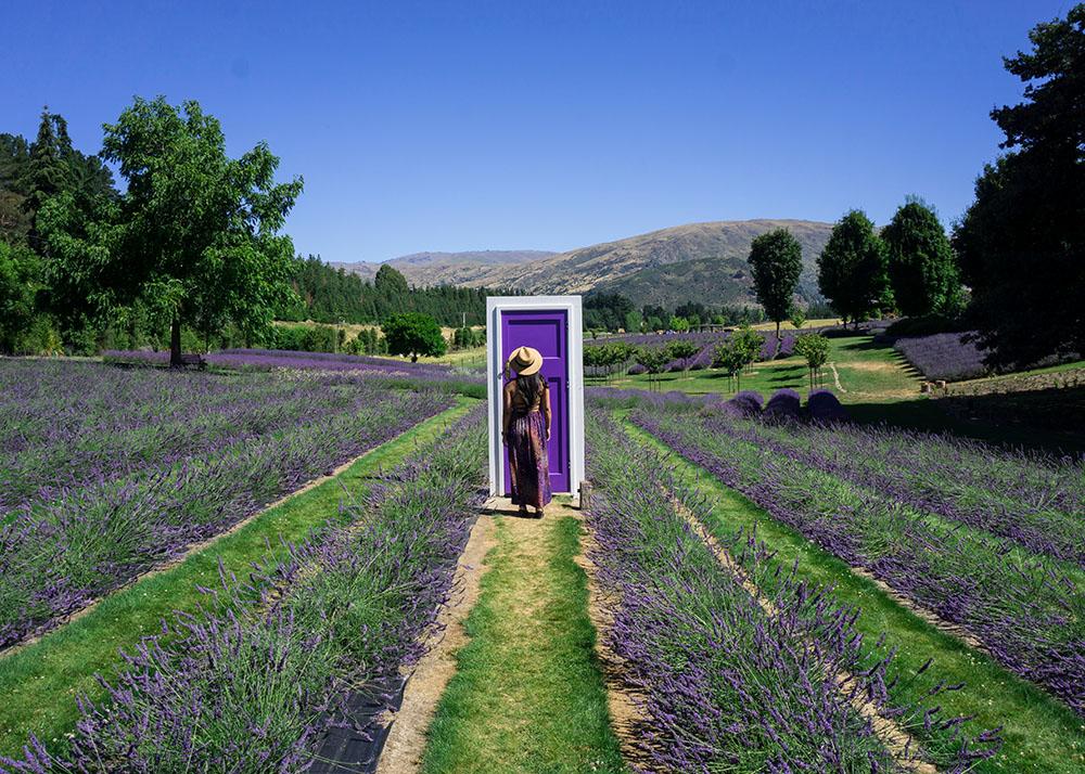 lavender-farm-wanaka-new-zealand